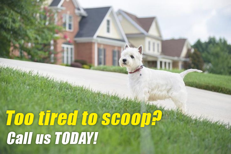 pet waste disposal service | lewisville